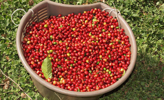 MARKET INSIGHT: Why Are Coffee Prices So Low? It's All About Stocks!