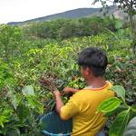 Estiagem na América Central pode reduzir mais oferta mundial de café