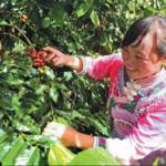 Coffee Imports by China Still Seen As Main Growth Indicator