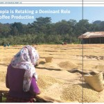 SPECIAL REPORT: Ethiopia Targets Spot As World's Nr 3 in Coffee as Horizon Expansion Grows