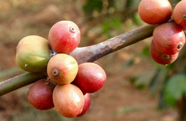 MARKET INSIGHT: Has The Coffee Market Gone Mad? May Futures Apr 7 Dn 1.70 at $1.1980/Lb