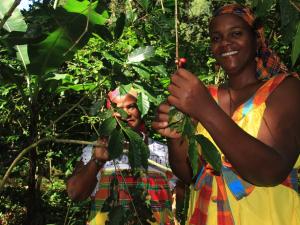 GuadeloupeCAribbean9