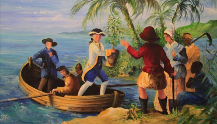 ORIGIN FOCUS: 4–Gabriel De Clieu's Epic Coffee Journey To Martinique