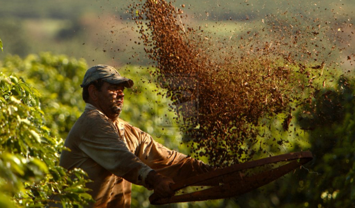 Brazil's Bahia Coffee Farmers Take Top-5 Spots In 100th Cup Of Excellence