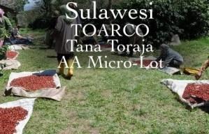 TorajaCoffee2sweettreeroasters.com