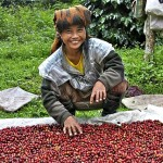 Coffee of the Day: Tourist Coffee Alert For Top Indonesia Toraja And Papua Beans