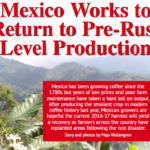 EXCLUSIVE: Mexico Eyes Specialty Coffee As Farms Replant From Rust